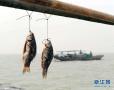 世卫发布百余种一类致癌物 浙江人爱吃的咸鱼也名列其中