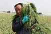 山东兰陵副县长刘志军:全县一半人口从事蔬菜产业