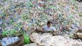 中國叫停洋垃圾進口給德國帶來巨大問題