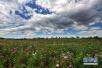 1月份烟台市区蓝天白云天数30天 空气质量优良率为80.6%