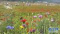 农村新风潮:节日期间周边游自驾占八成 部分景区爆棚