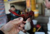 市场小龙虾上市 价格偏高市民问多购少