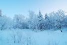 雪乡国家森林公园获评国内十大最受欢迎森林公园