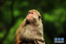 春意萌动黔灵猴