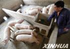 山东:生猪价格回暖养殖户补栏积极