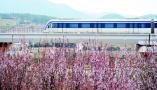 青岛地铁11号线开通首日纳客2.7万人次