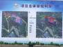 黄河北万亩花海栽植完成95%!明年1月市民可踏雪寻梅