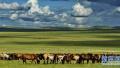 长线自驾游暑期最风光 把草原的风光搬回家