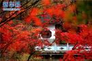 河南推出最全赏红叶地图 这些地方值得推荐