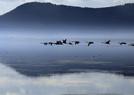 天鹅湖景美如画