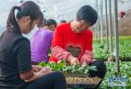 武邑县建立蔬菜专业合作社 扶持种植绿色蔬菜