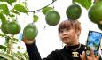 河南夏邑:立体种植法提高农业效益