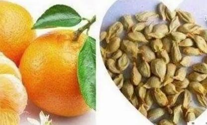 吃水果最好吐籽 避免引起肠胃不适