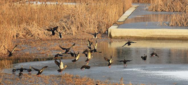 青岛:环保志愿者为鸟类投食越冬