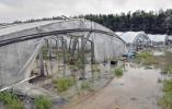 """应急管理部:台风""""利奇马""""已致逾1288万人受灾"""