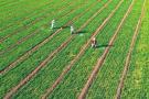 河南:开闸放水保春灌 29个灌区累计引水2.7亿立方米