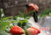 河南郏县:扶贫产业园拓宽脱贫致富路