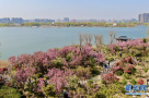 春到商丘日月湖
