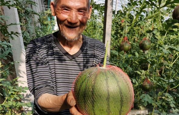 河南郏县:扶贫西瓜甜在群众心坎儿上