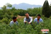 驻马店:驻村帮扶工作队积极谋划产业项目 精准帮扶促增收