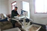 河南商城:艾草飘香产业旺