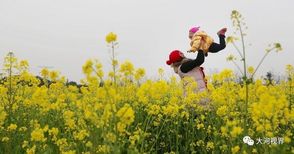 洛阳的油菜花铺满田野,让人看到收获的希望。