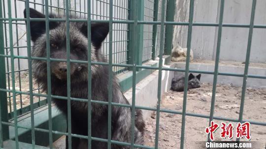 野生动物保护法修订草案进入三审阶段