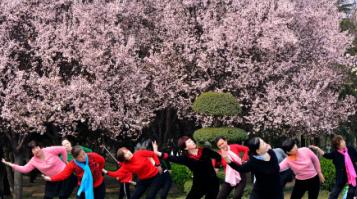 春日缤纷季 洛阳花儿笑