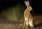 濒危物种在禁区繁衍