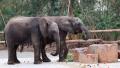 非洲原野上最大陆生哺乳动物驾到!上海野生动物园展出国内首个非洲象大种群