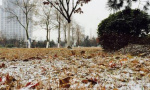 连云港徐州今晨下小雪 花果山有不少积雪