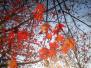 南京處處是美景 街邊紅楓暖人心