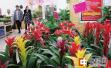 郑州节前花卉小幅上涨 中小型花卉和干花受青睐