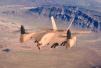 二战时期设计战机竟称未来智能空中火力平台