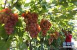 青岛农产品质量合格率超98.5% 农民收入稳增
