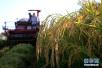 农业部部长:下调稻谷和小麦收购价对农民积极性影响不大