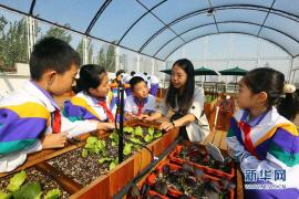 河南农业科技转化成果丰硕