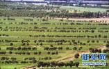我国人工林面积居世界首位 推进区域林业协调发展