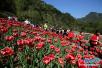 受萨德影响韩国游客锐减 张家界去年旅游收入下降7.18%