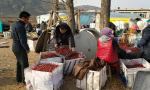 锦州全善堡村5万斤红辣椒滞销 网上求助全有了着落