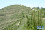 廊坊大厂县超额完成全年造林绿化任务