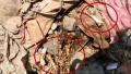 媒体深夜探访云南村民盗挖走私冻肉现场:恶臭扑鼻、蝇虫满地