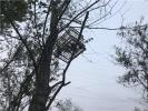 葫芦岛民警巡逻连拆3张10米高捕鸟网 正全力追查捕鸟人