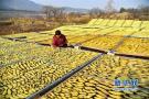 青岛:农产品出口额稳居全国城市首位!