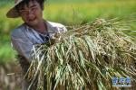 中国农民丰收节,放不放假?高速免费吗?