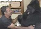 大猩猩會1千種手語