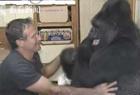 大猩猩会1千种手语