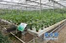 全国蔬菜质量标准中心落户潍坊 助力新旧动能转换