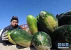 农产品质量安全怎么管?官方称这样保障舌尖上的安全