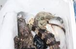 浙江女子网购保健品,拆开包裹发现里面竟是一只鳄鱼